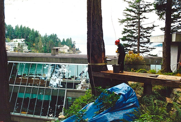 Tree Removal at Glass House